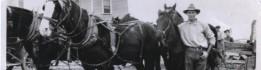 cropped-hamilton-claude-and-team-of-horses.jpeg